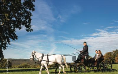 Kobilarna in vožnja s kočijo
