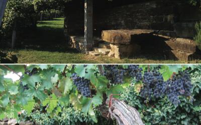 Vinsko doživetje Istre