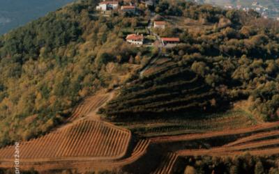 Vrhunska degustacija vin